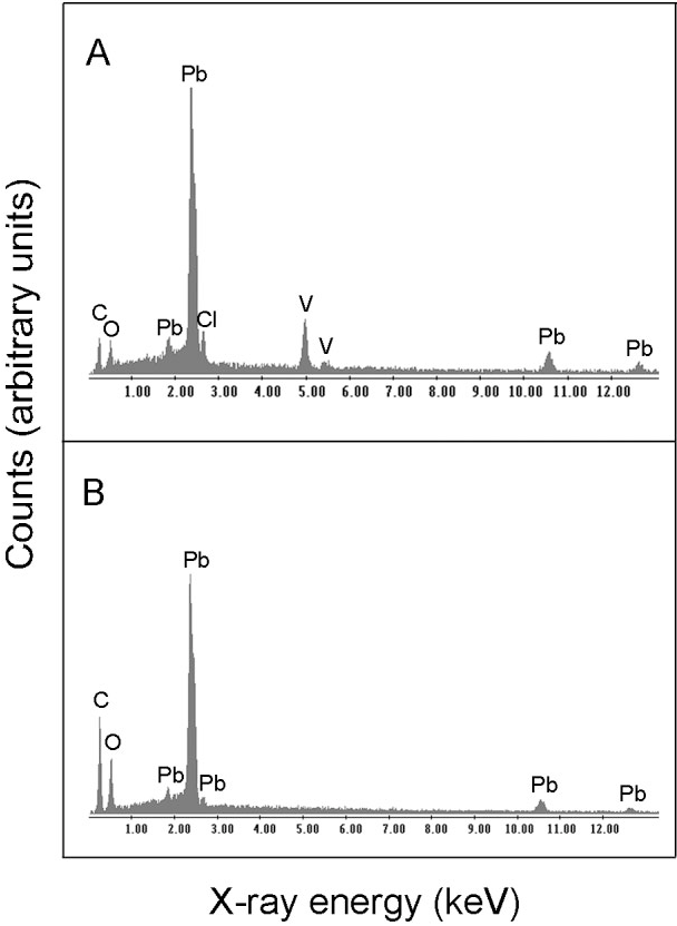 Fig. 4. Energy-dispersive X-ray microanalysis (EDXA) of crystals produced by A. niger during growth with natural vanadinite. (A) Natural vanadinite (shown in Fig. 1A) and (B) lead oxalate formed by A. niger (shown in Fig. 2). Typical spectra are shown from one of at least three determinations.