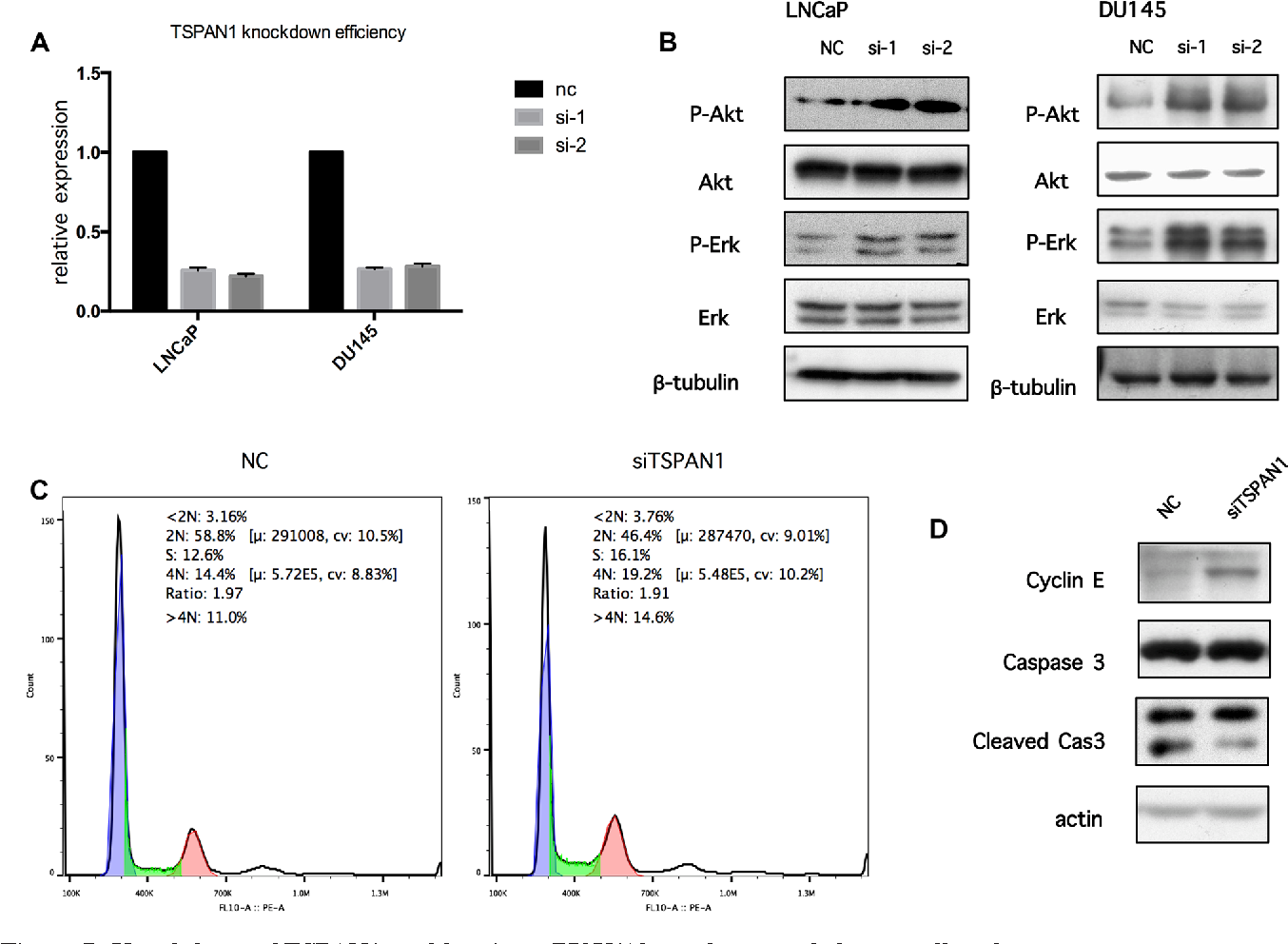 Figure 7 from Decreased TSPAN1 promotes prostate cancer