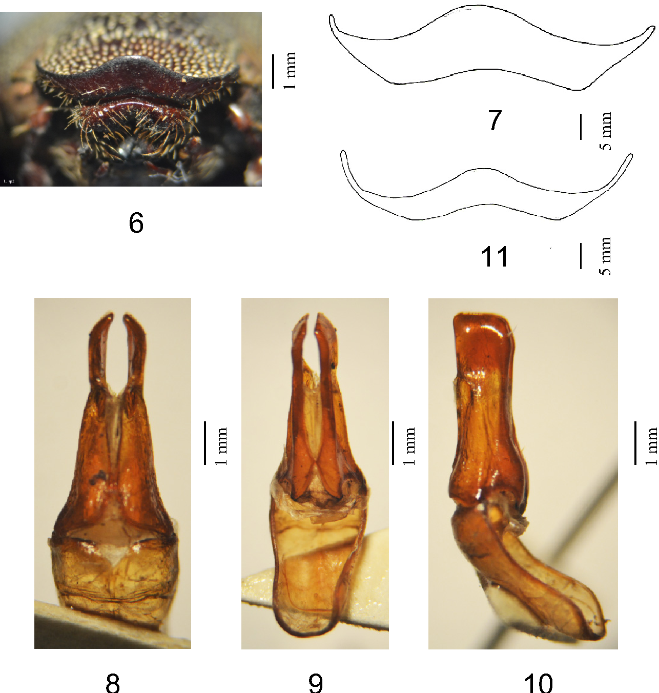 figure 6–11