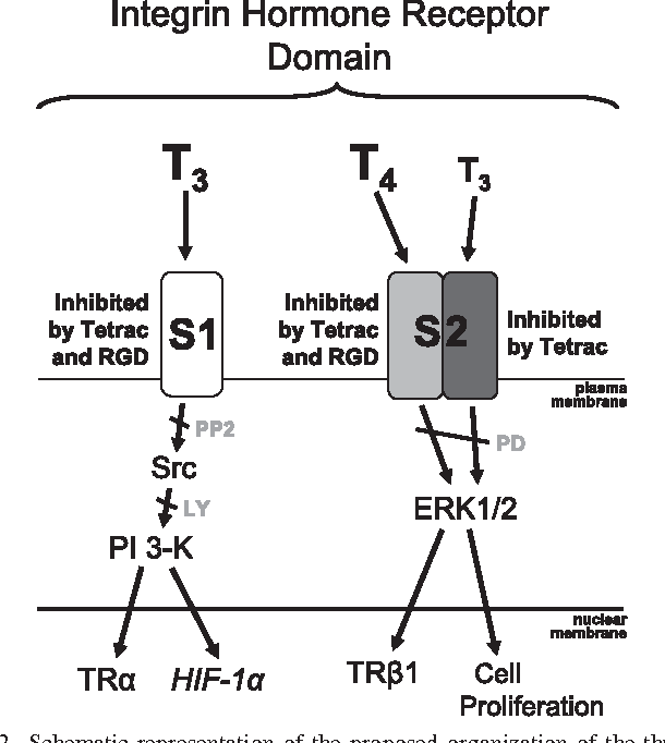 Figure 2 From Translational Implications Of Nongenomic Actions Of