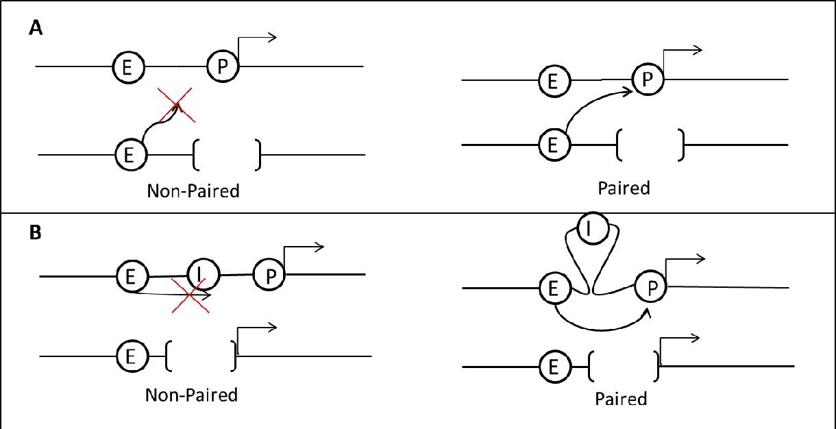 model a trans diagram figure 1 from the metabolic enzyme locus triosephosphate isomerase  locus triosephosphate isomerase