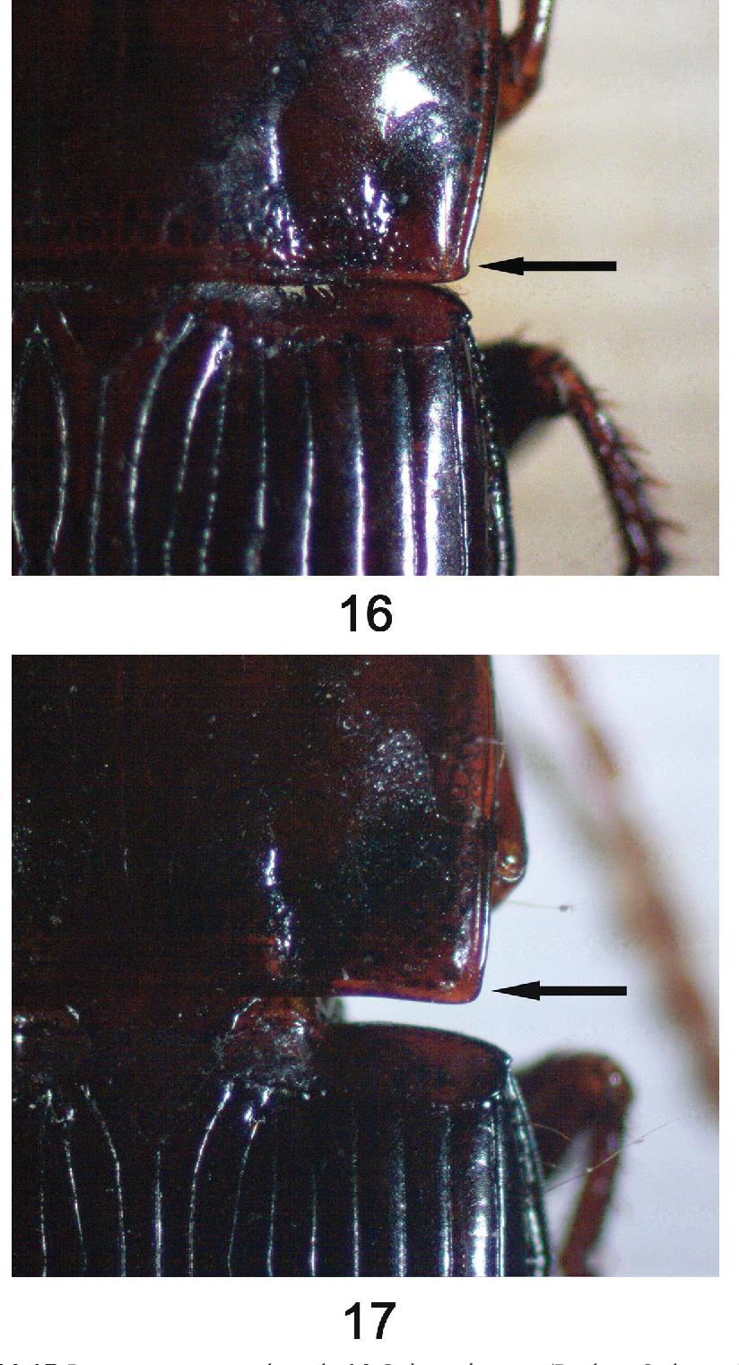 figure 16–17
