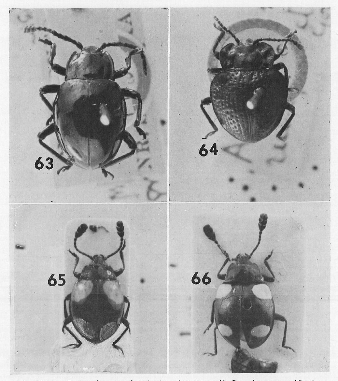 figure 63-66