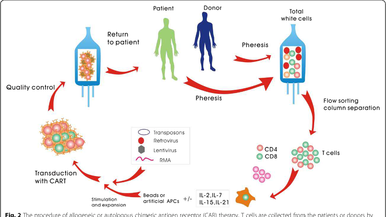Figure 2 From Allogeneic Cd19 Car T Cell Infusion After Allogeneic Hematopoietic Stem Cell Transplantation In B Cell Malignancies Semantic Scholar