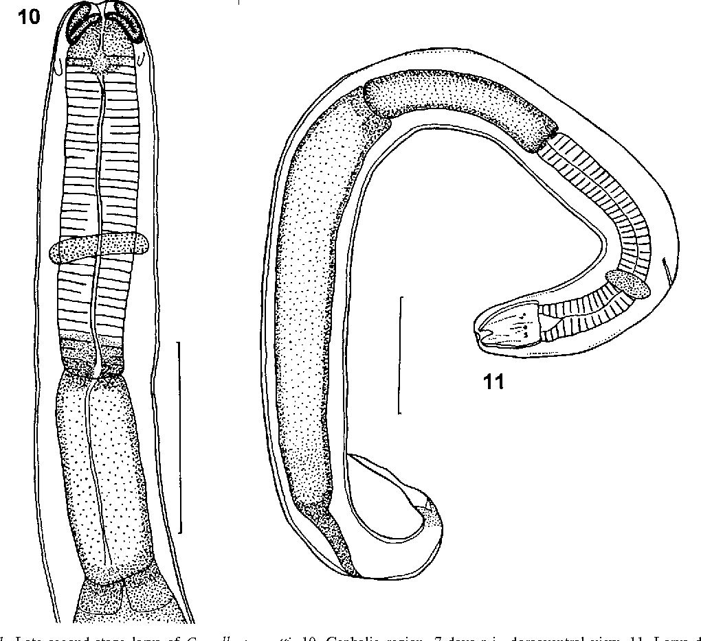 figure 10–11