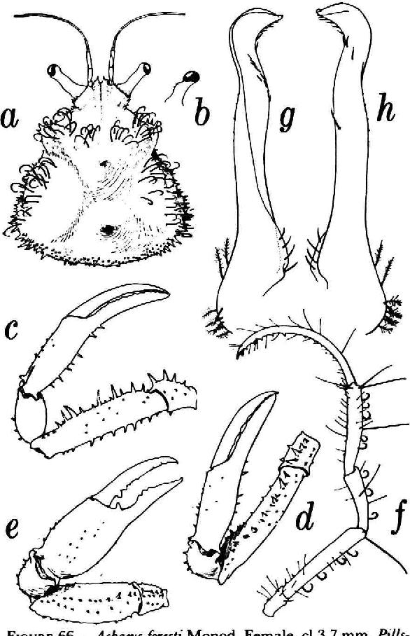 figure 66