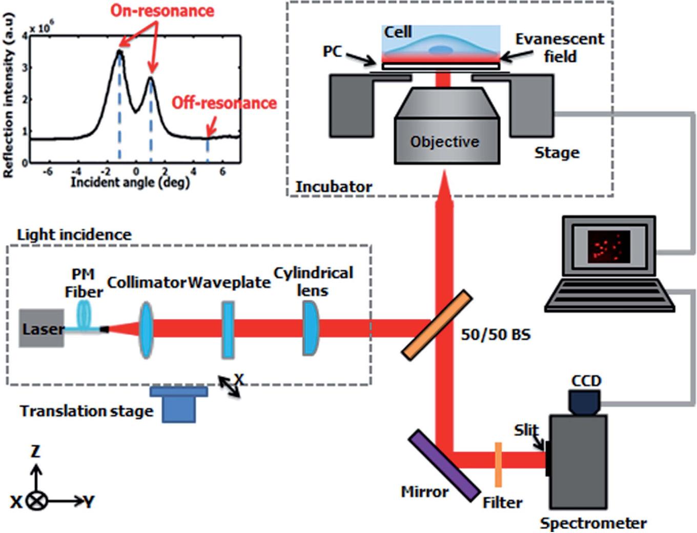 PDF] Enhanced live cell imaging via photonic crystal enhanced ...
