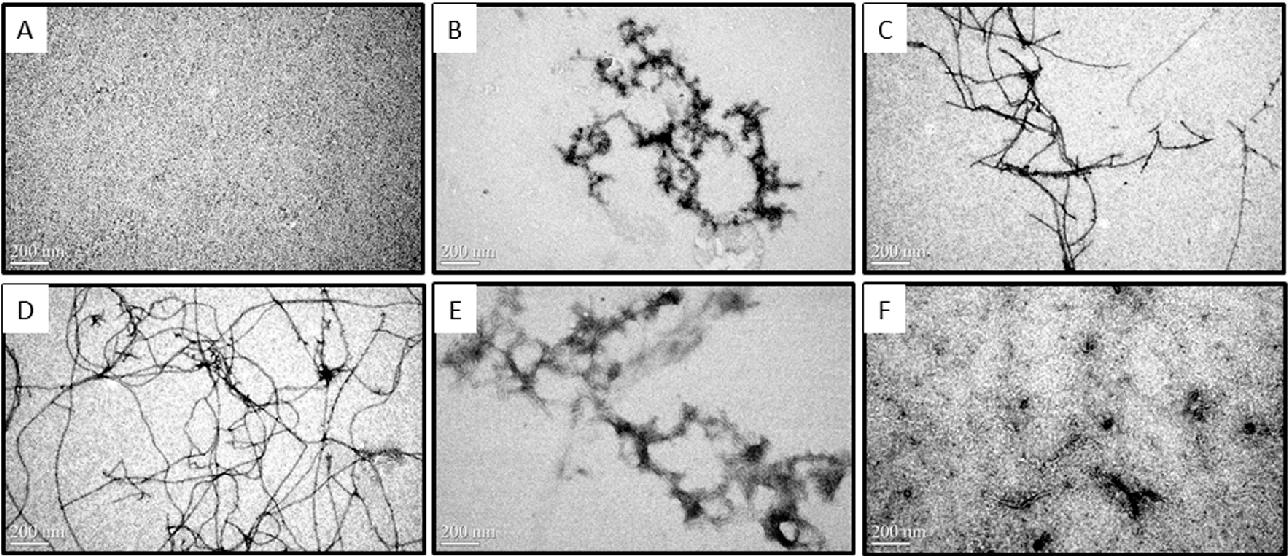 Figure 2 from Chitosan Oligosaccharides Inhibit/Disaggregate