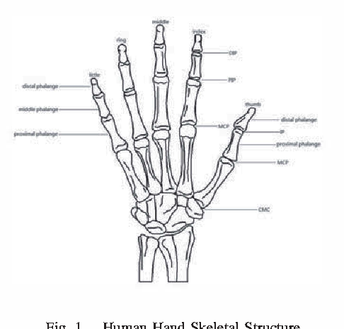 Construction of virtual 3D life-like human hand for real