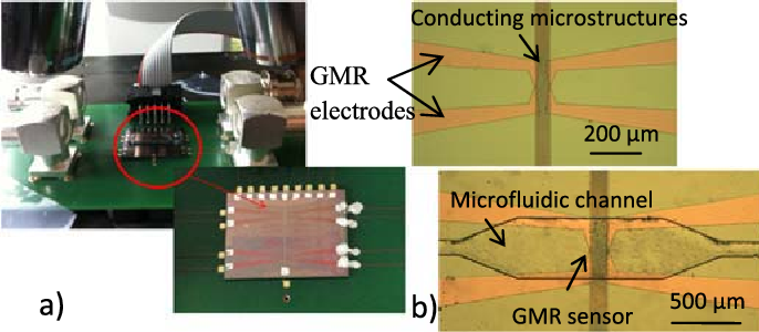 Fig. 1. (a) Photograph of the developed diagnostic microsystem consisting of the GMR sensors, the conducting microstructures, and the microfluidic channels. (b) Microscope photograph of the GMR sensor with the conducting microstructures and the microfluidic channel.