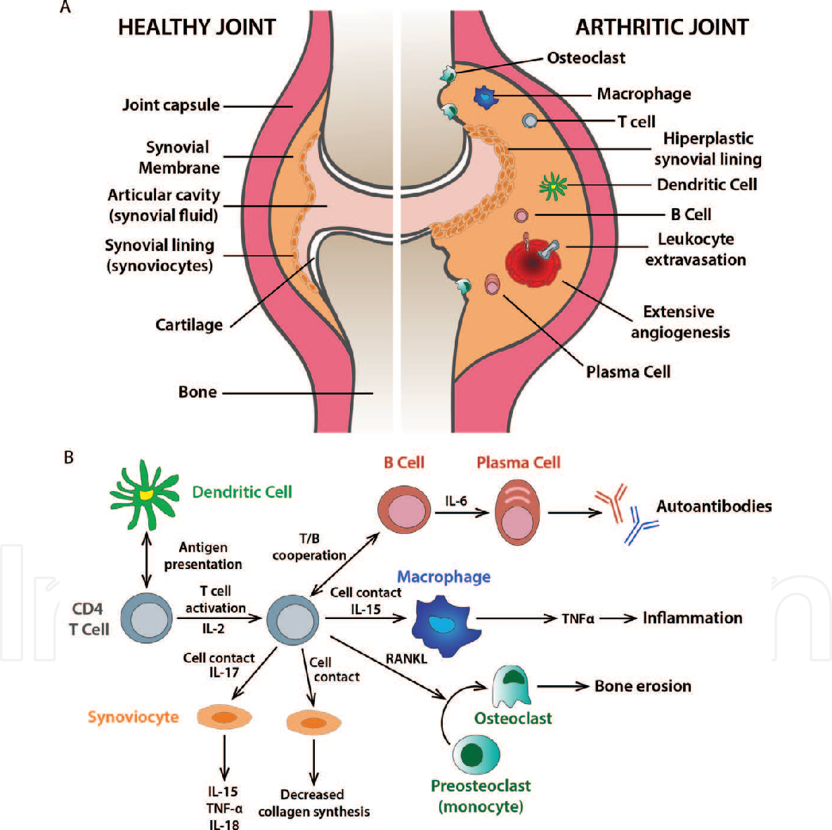Autoimmune Diseases Role Of Cd 4 T Cells In Rheumatoid Arthritis Semantic Scholar