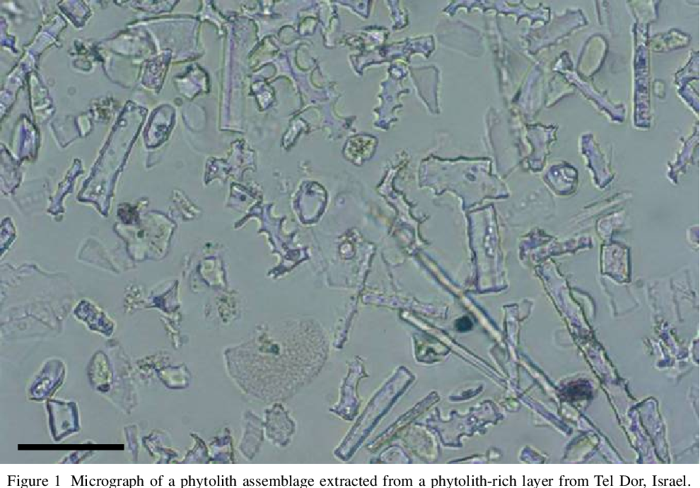 Phytoliths dating