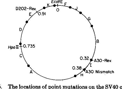 Figure 5 from Biochemical Method for Mapping Mutational ... on
