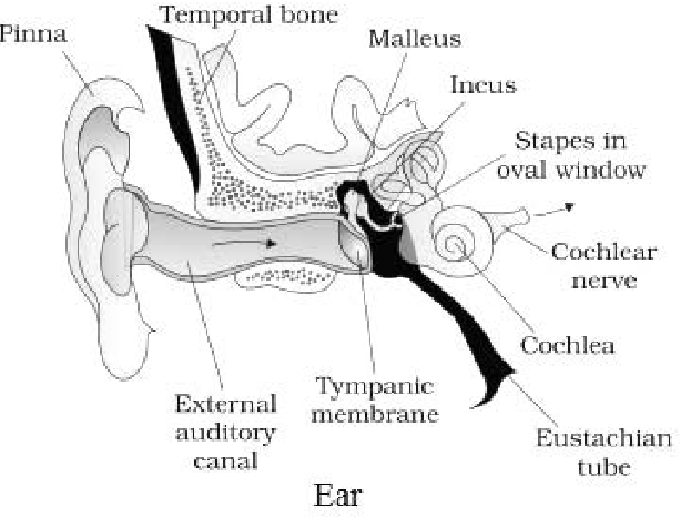 Figure 3 From The Chorda Tympani Nerve Role In Taste Impairment In Middle Ear Disease And After Ear Surgery Semantic Scholar We're fully delving into all things everything. figure 3 from the chorda tympani nerve