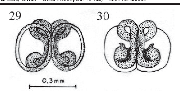 figure 29-30