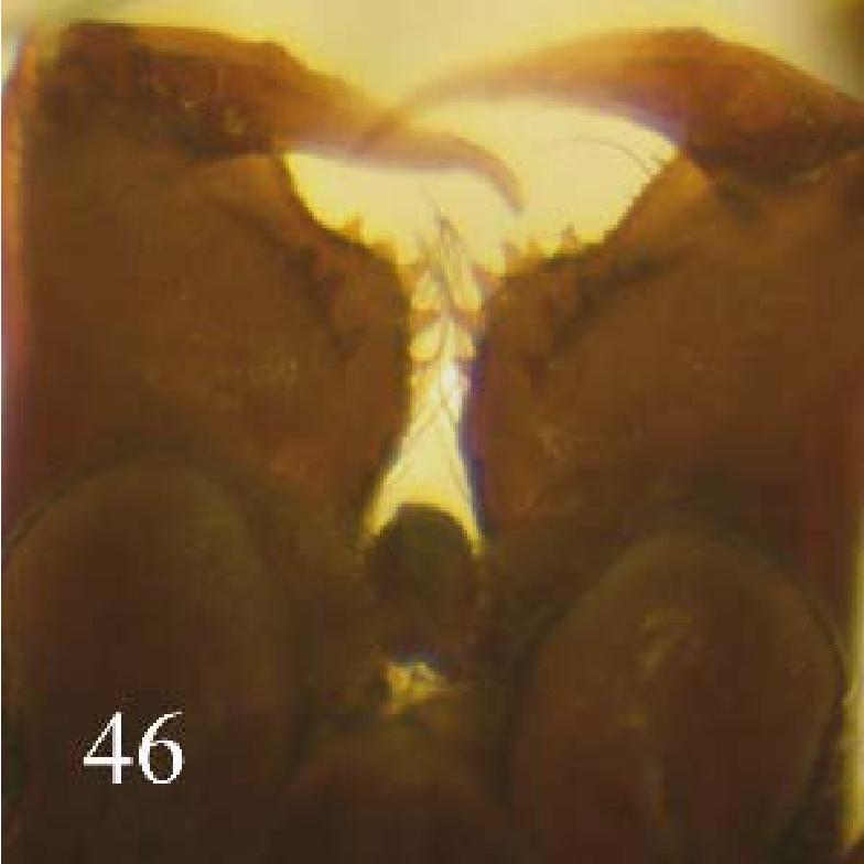 figure 44-46