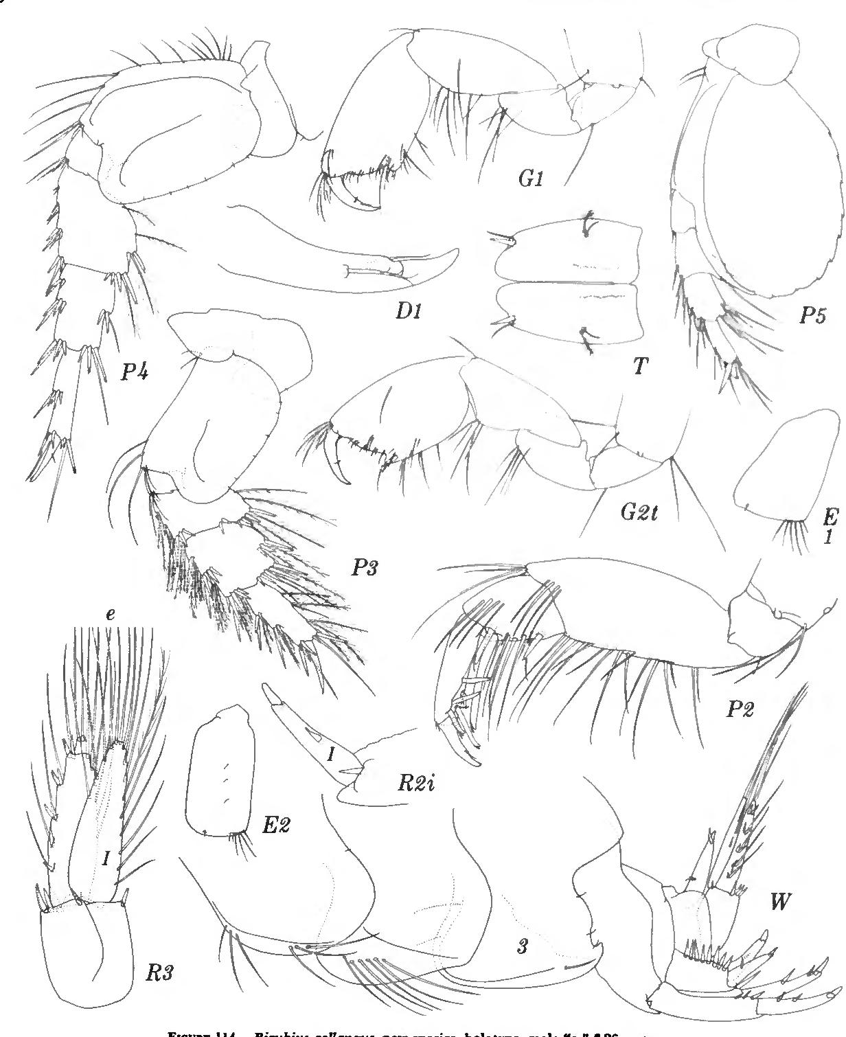 figure 114