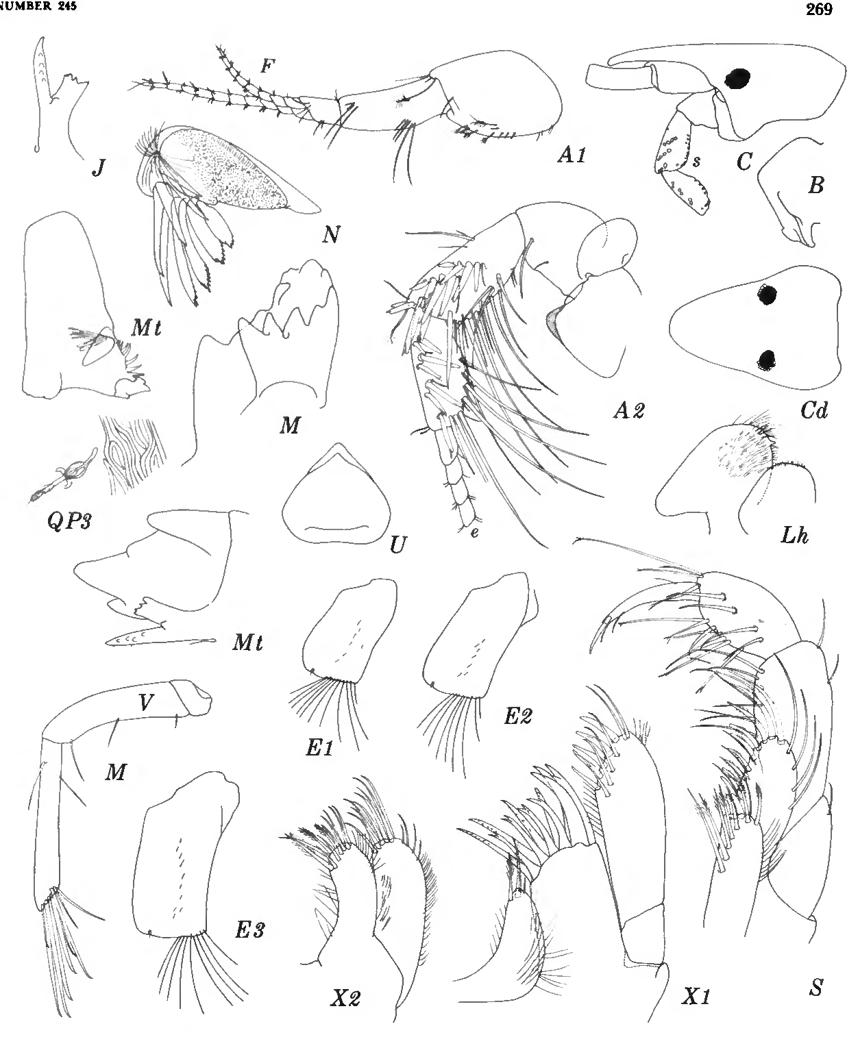 figure 125