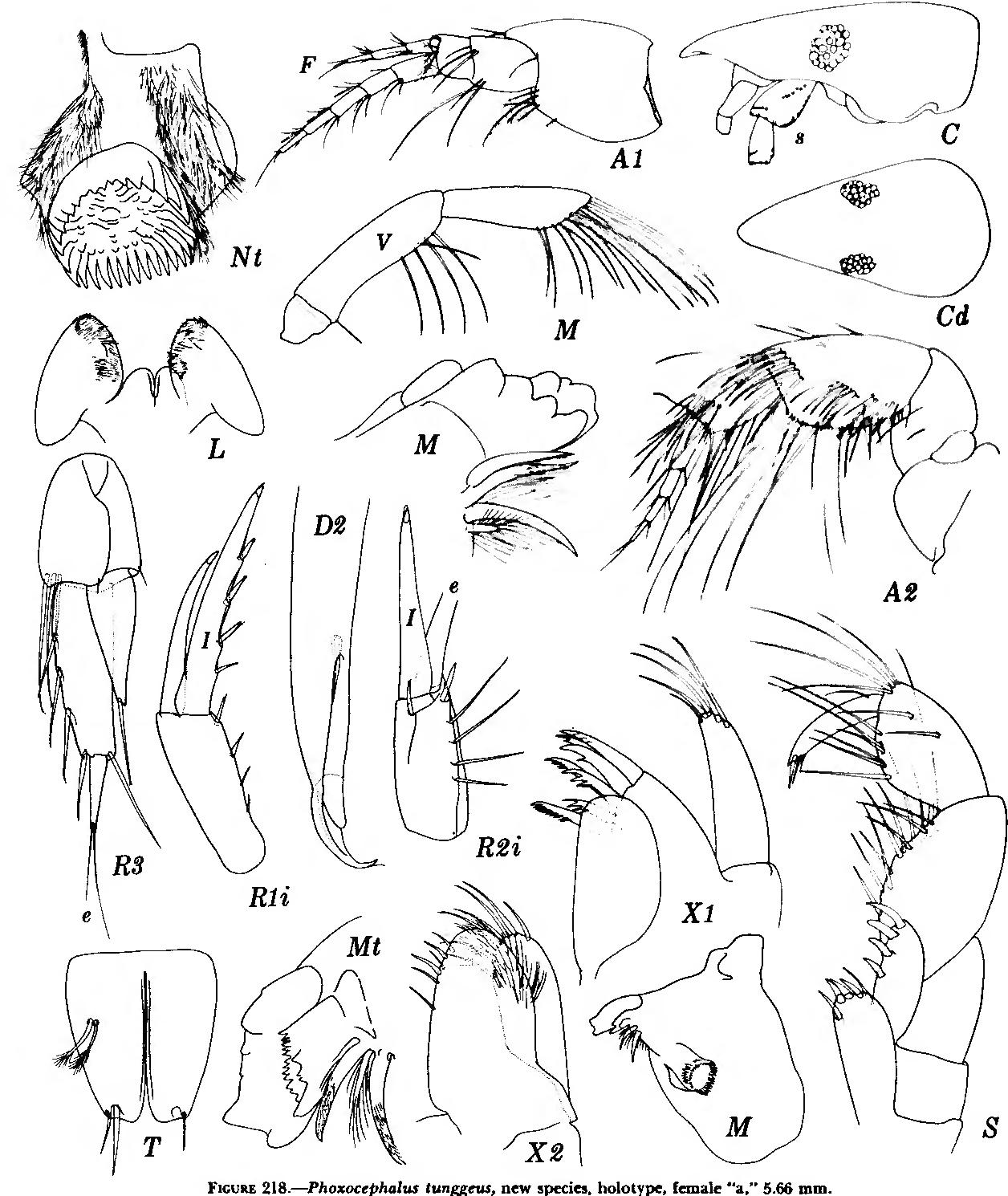 figure 218