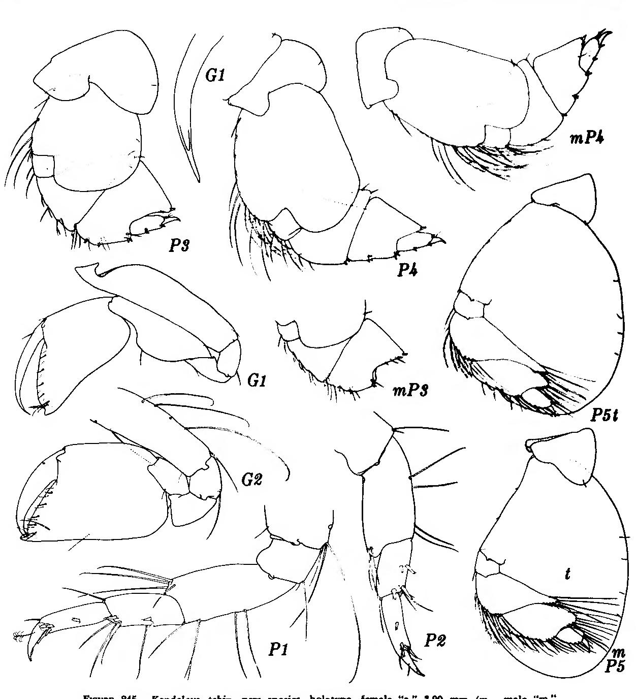figure 245