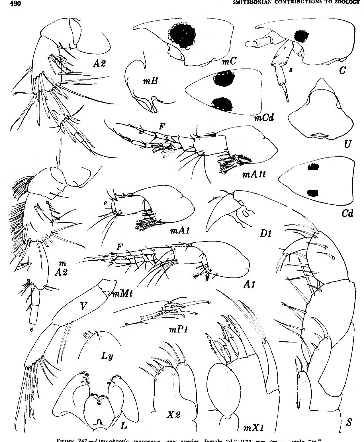 figure 247
