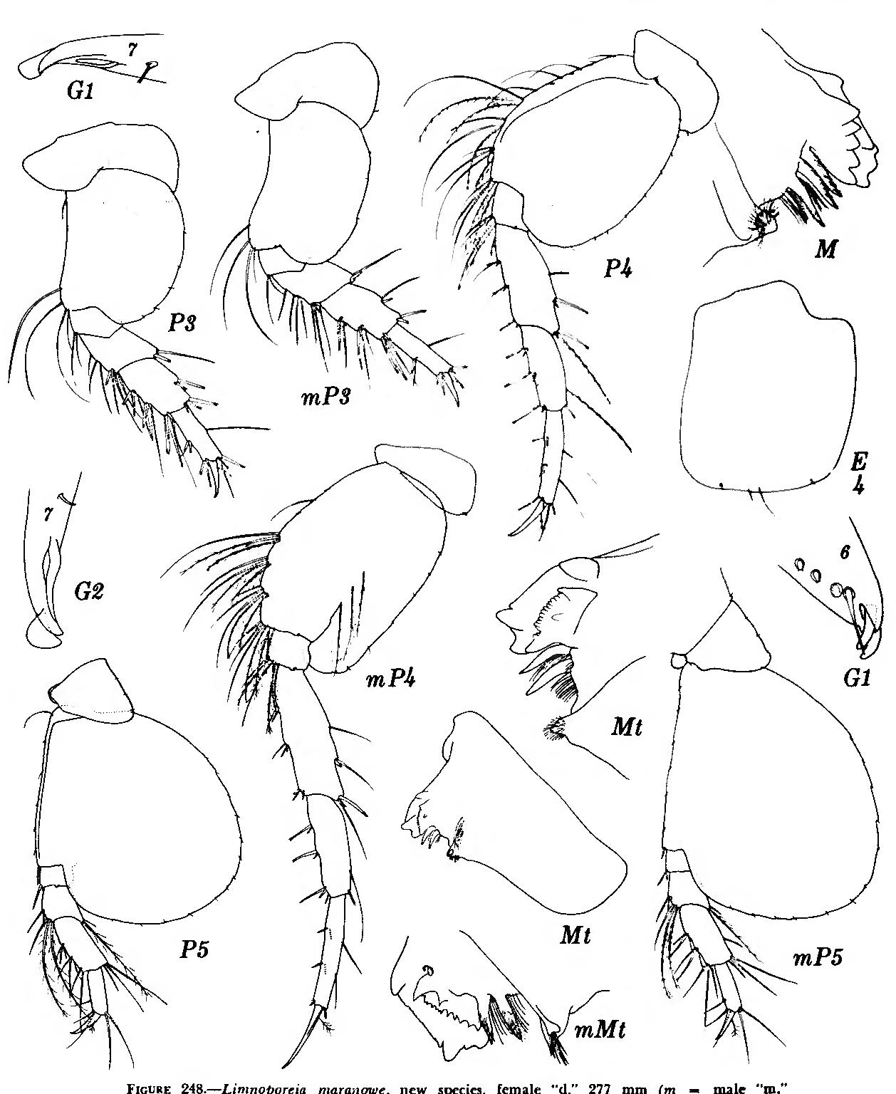 figure 248