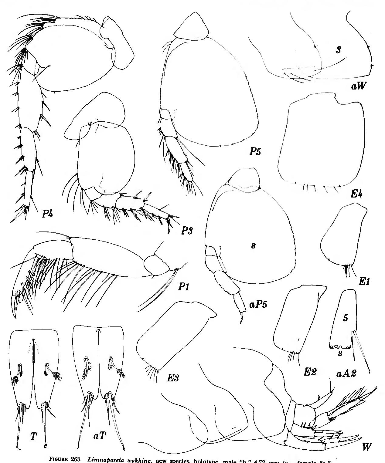 figure 263