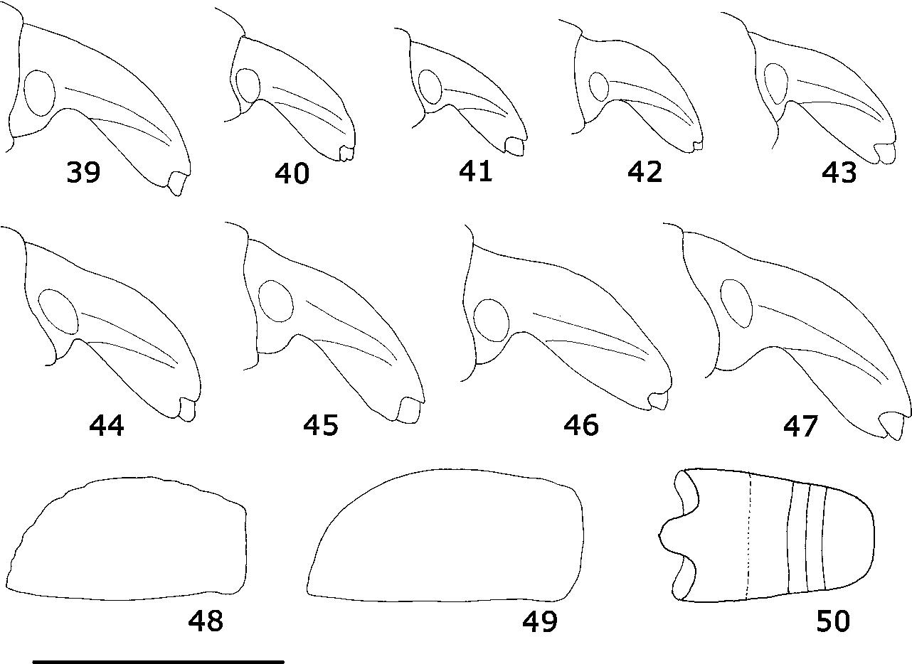 figure 39–50