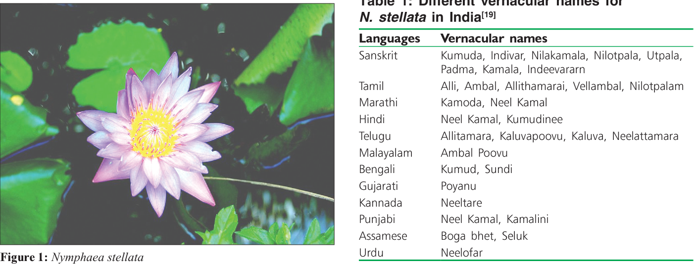 Pdf A Comprehensive Review On Nymphaea Stellata A Traditionally Used Bitter Semantic Scholar
