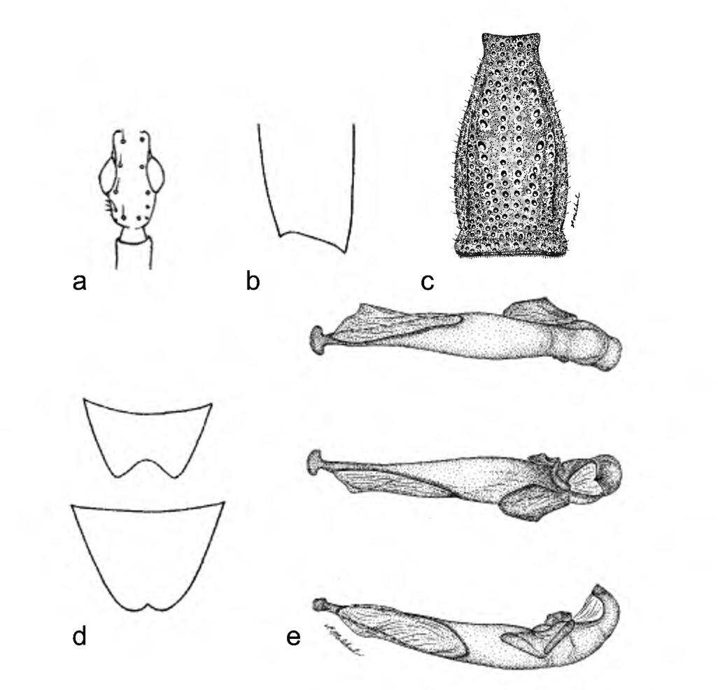 figure 31