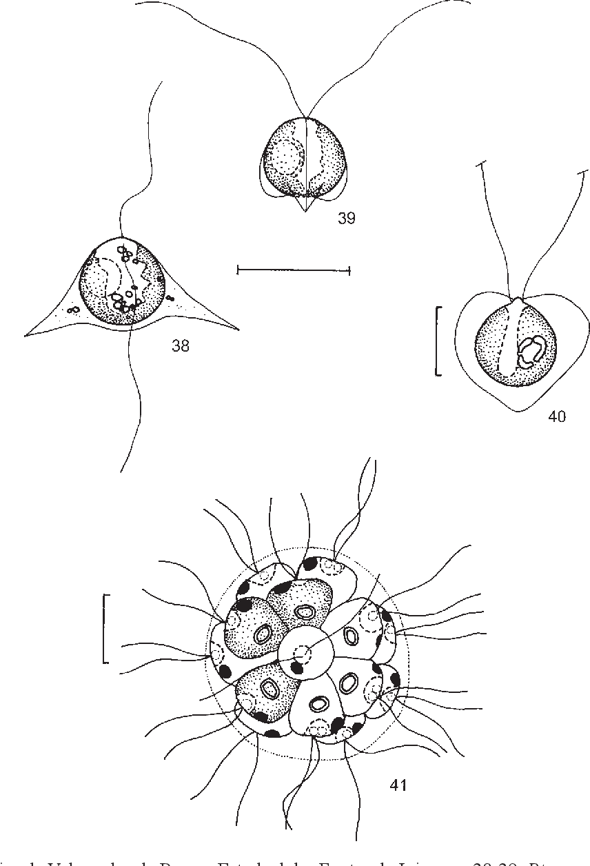 figure 38-41