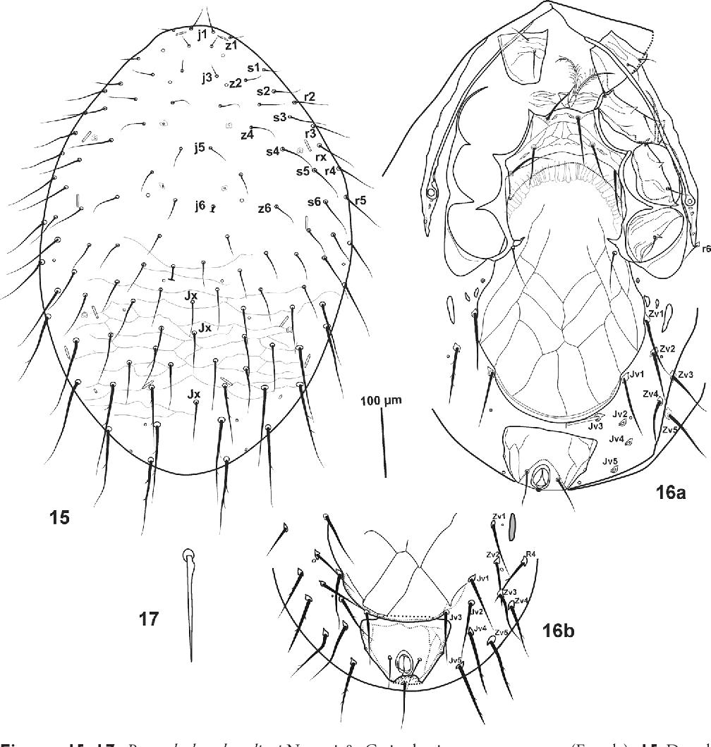 figure 15–17