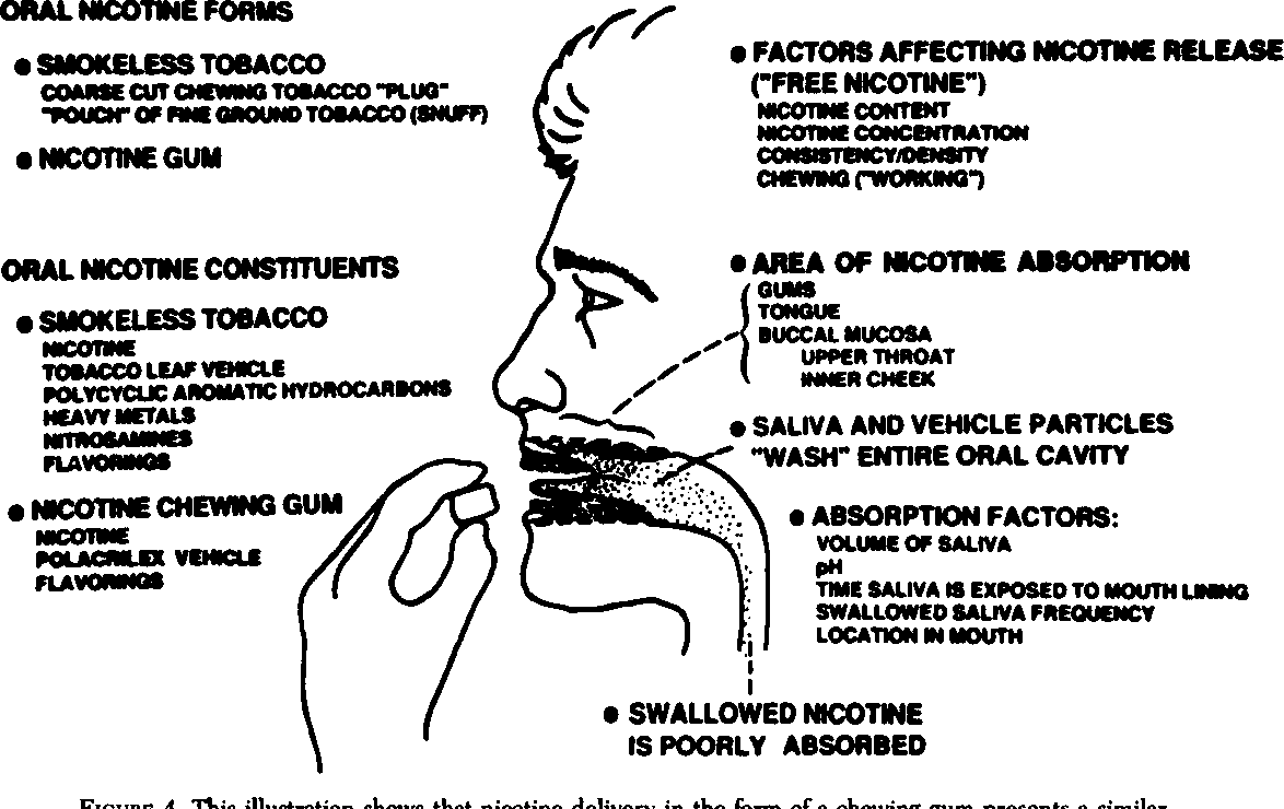 Figure 4 from Nicotine dependence  Interface between tobacco