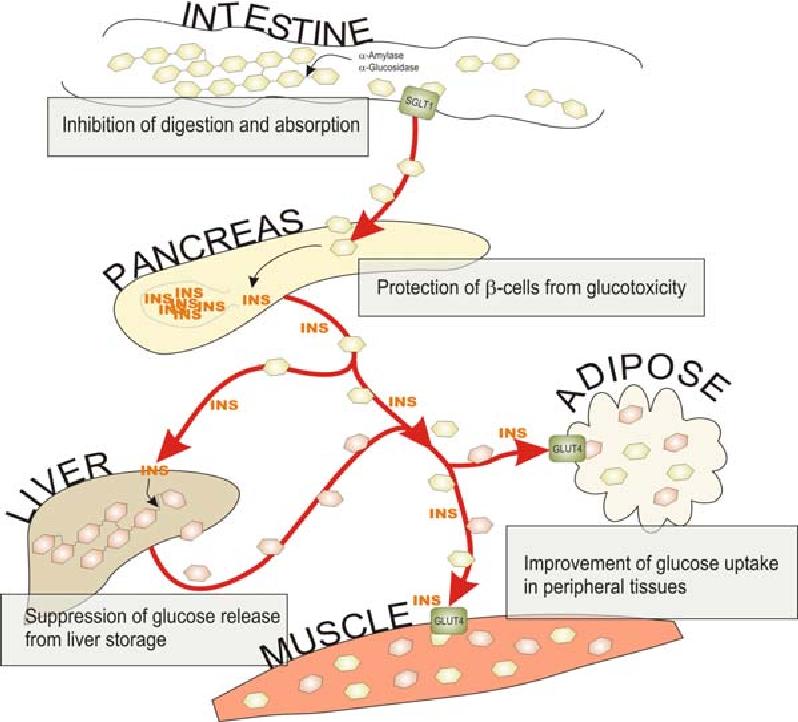 Gestörter Stoffwechsel durch den Diabetes