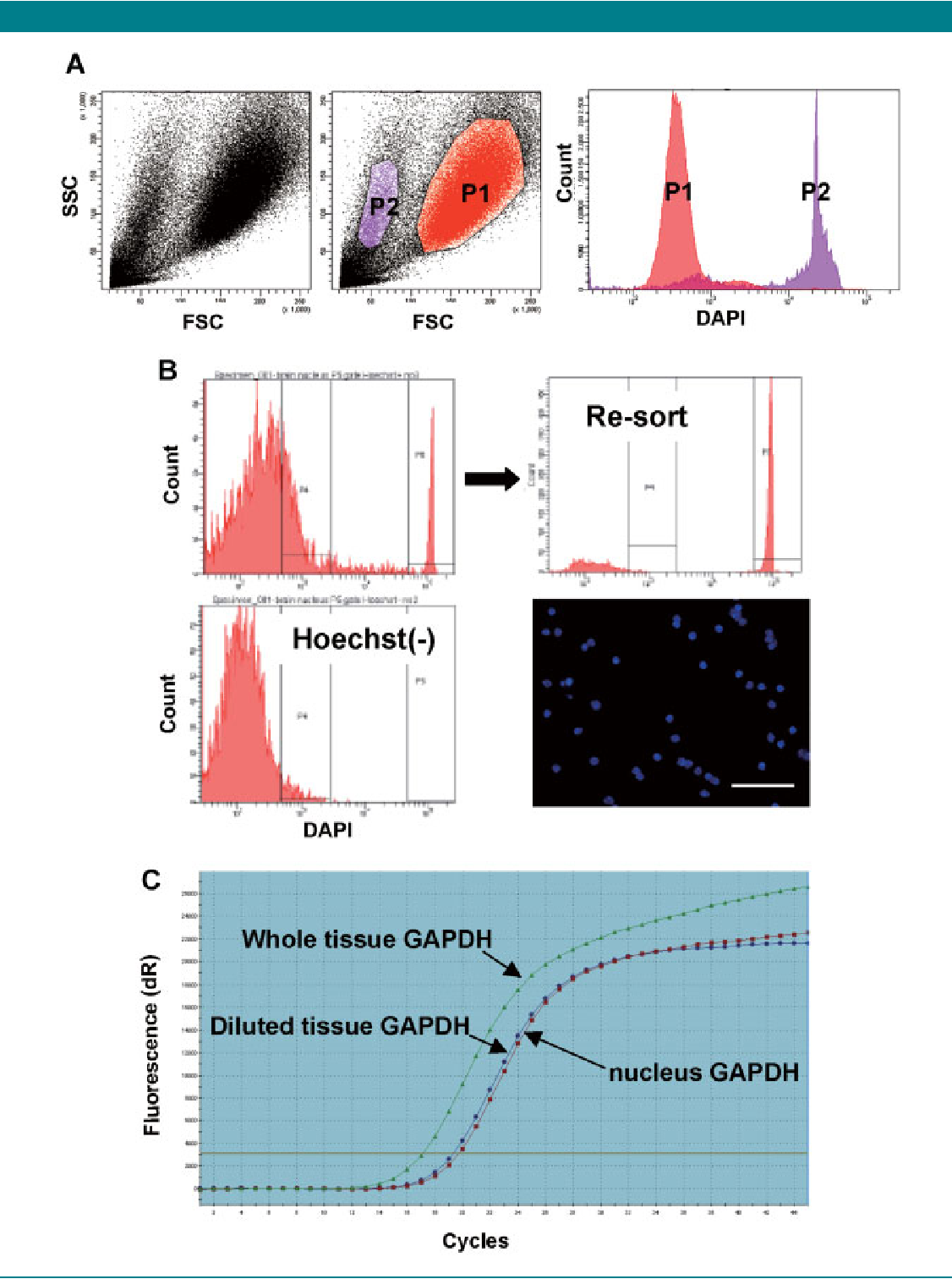 Figure 2 from Flow cytometric sorting of neuronal and glial