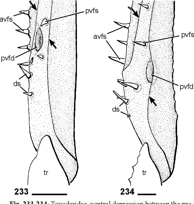 figure 233-234