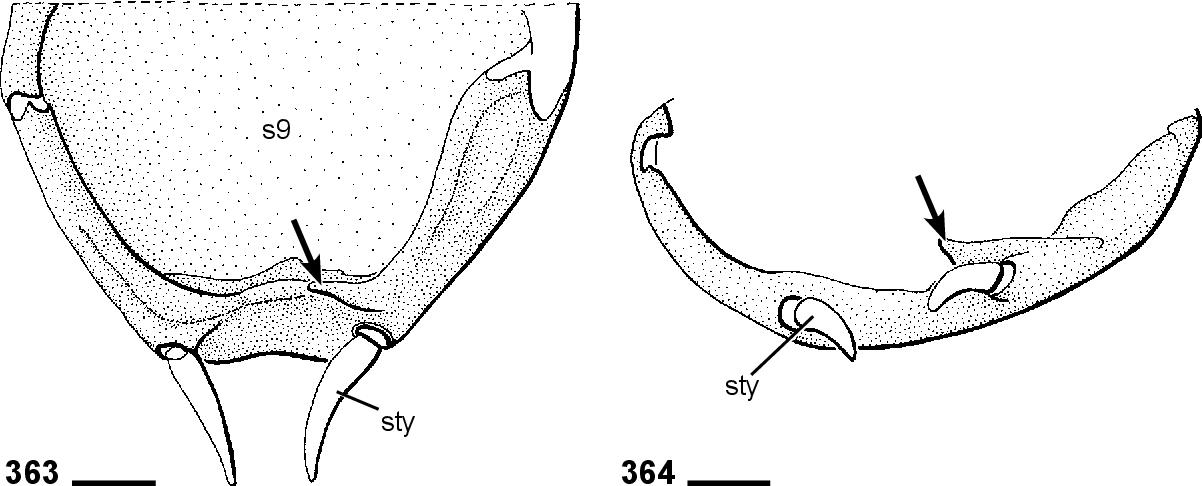 figure 362-363