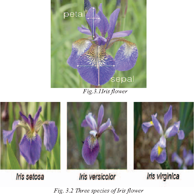 Performance Evaluation Of Supervised Learning For Iris Flower Species Semantic Scholar