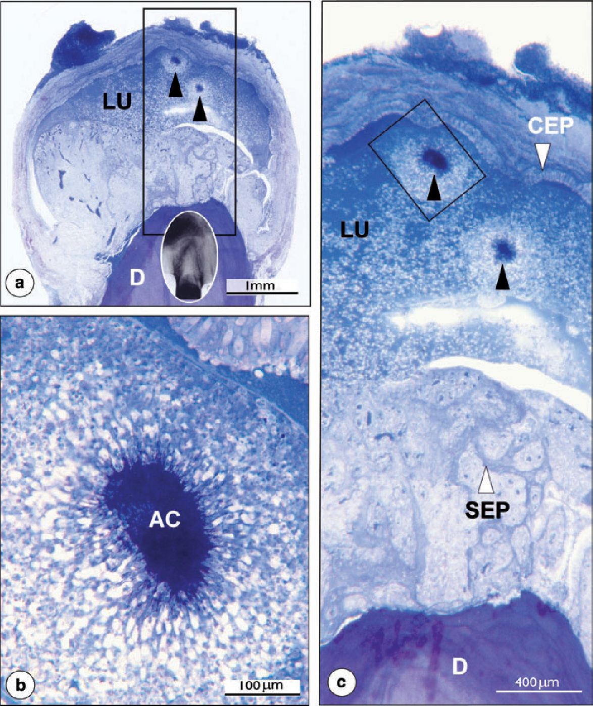 Figure 4 from On the causes of persistent apical