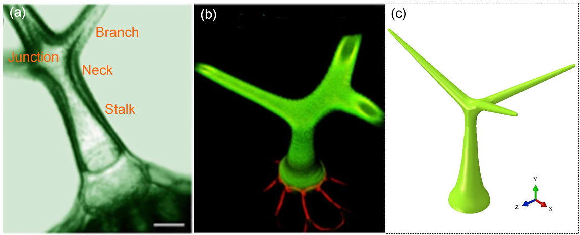 Figure 1 from Arabidopsis Leaf Trichomes as Acoustic