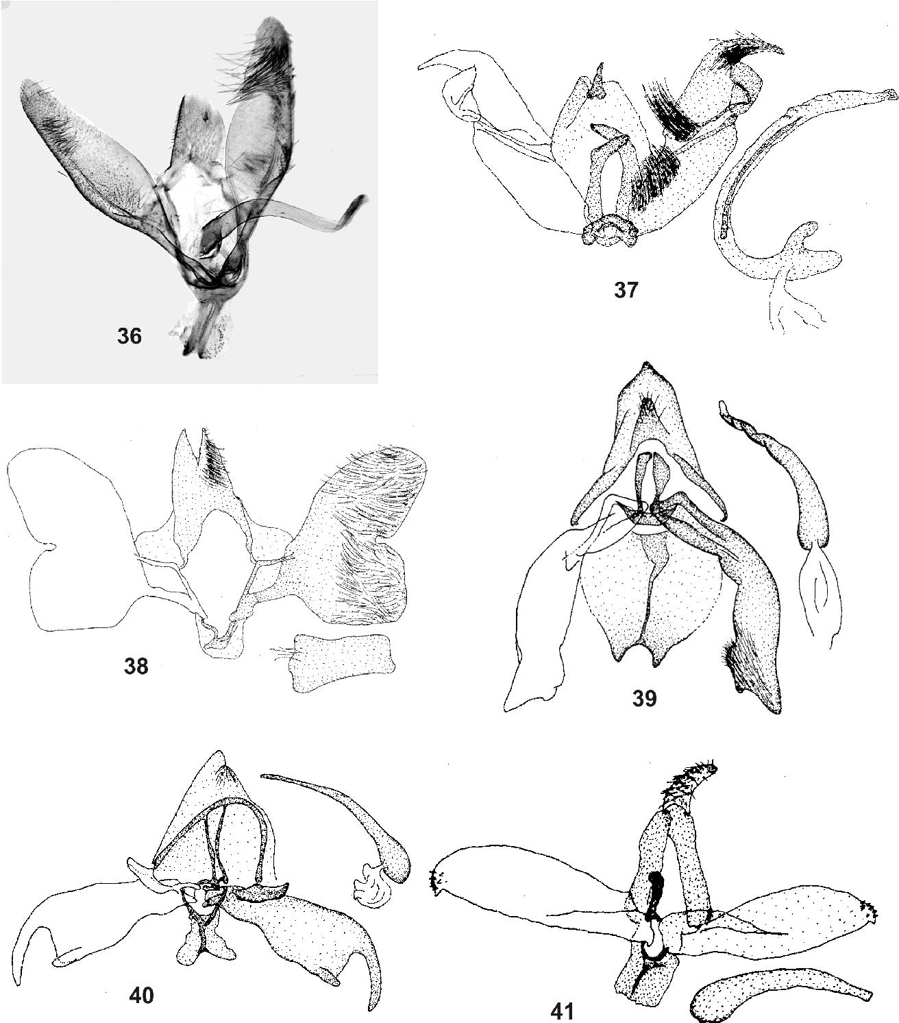 figure 36-41