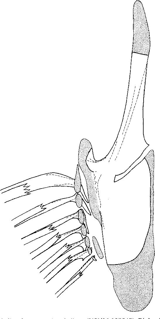 figure 65