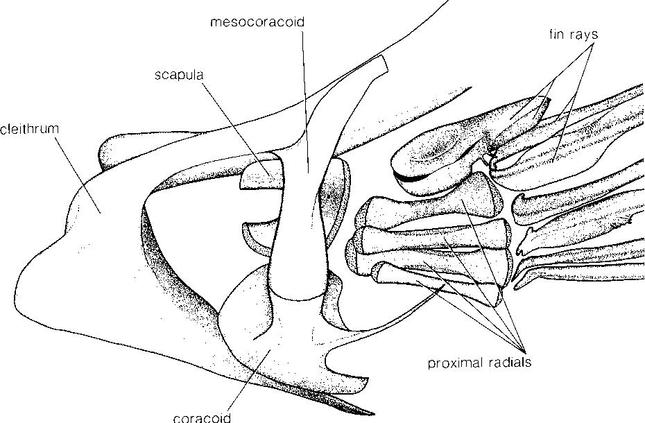 figure 41