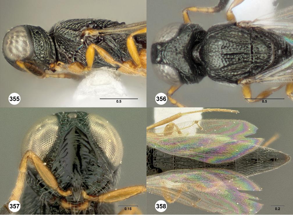 figure 355–358