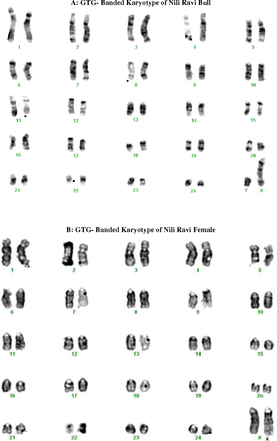 PDF] First Report on Standard G-Banded Karyotype of Nili