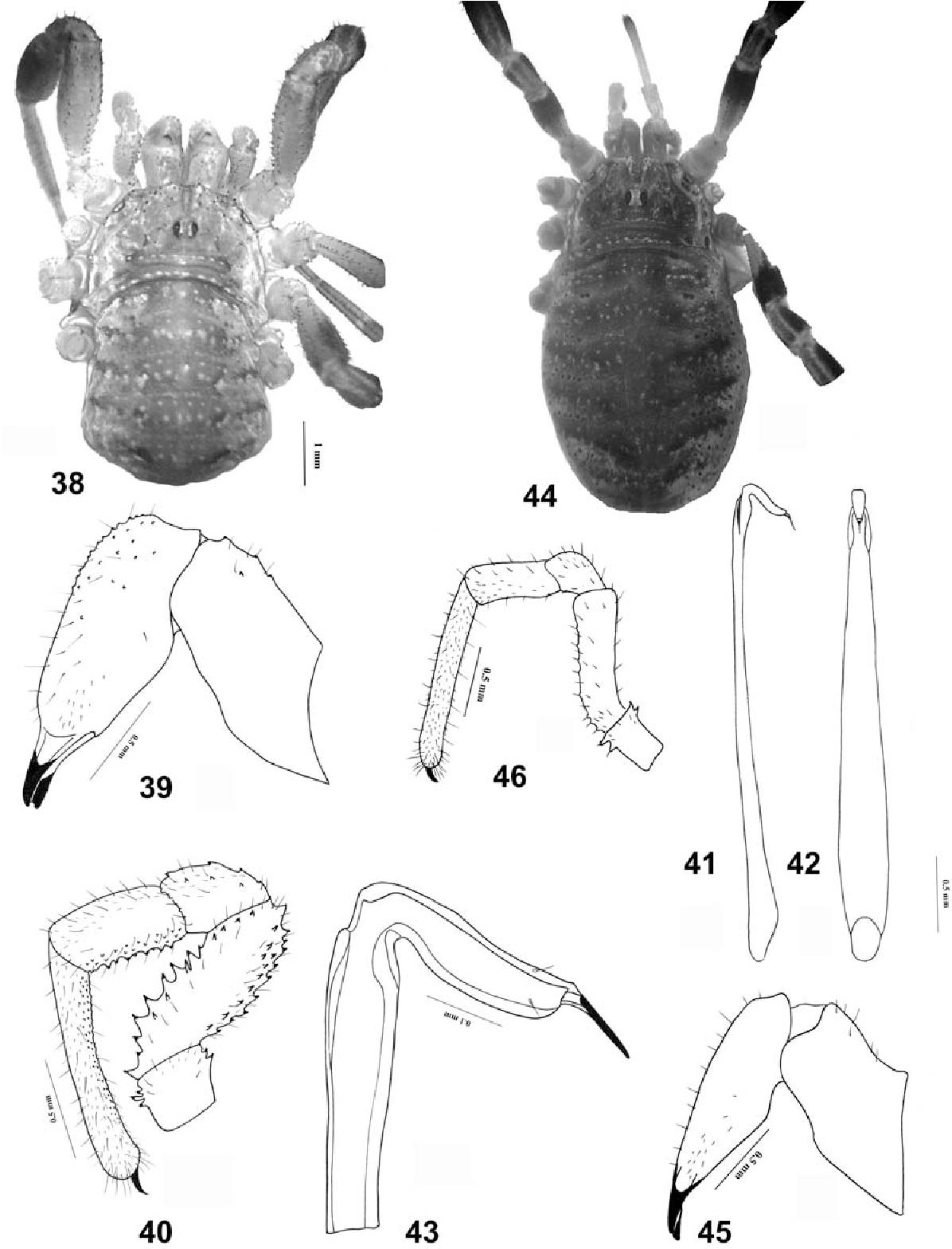 figure 38–46