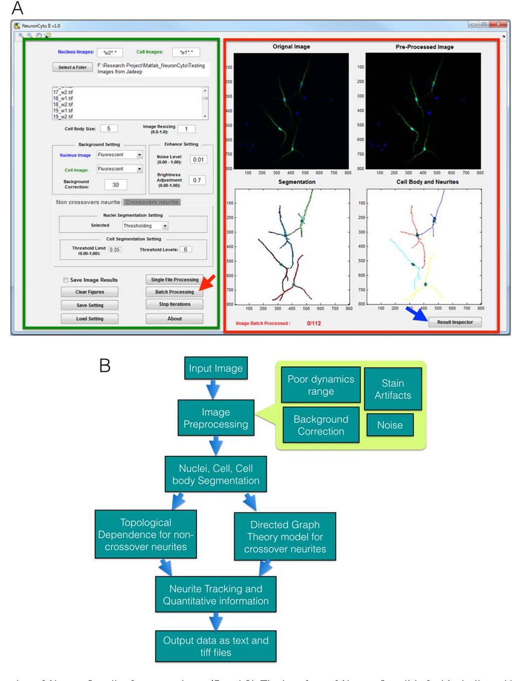 NeuronCyto II: An automatic and quantitative solution for