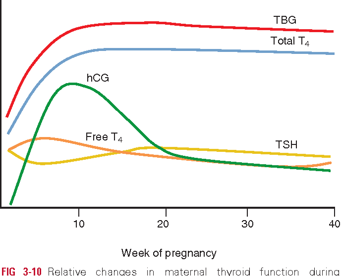 Figure 3 10 From Chapter 3 Maternal Physiology Semantic Scholar