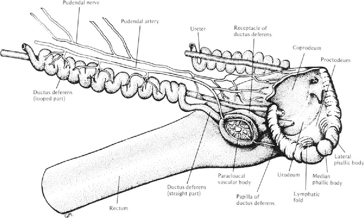 figure 19-5