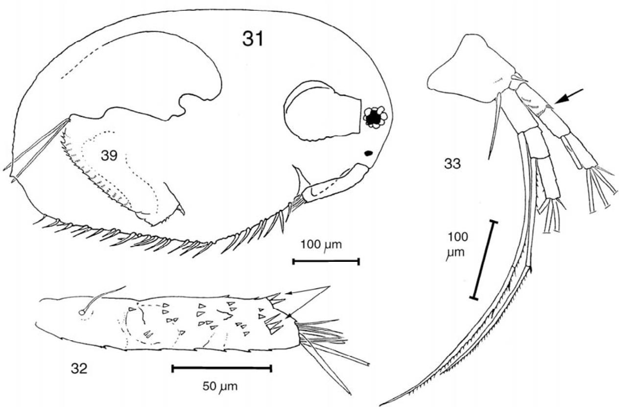 figure 31–33